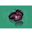 plums tree vector image vector image