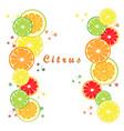 the set citrus vector image