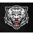 Face of a white tiger On dark background vector image