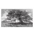 charter oak vintage vector image vector image