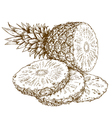 etching pineapple slices vector image vector image