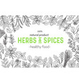 herbs and spice vector image vector image