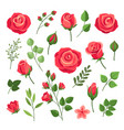 red roses burgundy rose flower bouquets with vector image