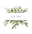 watercolor banner olive branches and vector image vector image