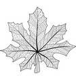 coloring book page with maple leaf vector image vector image