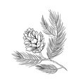 fir cone pine tree branch spruce line art vector image vector image