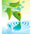 green leaves with ladybug vector image