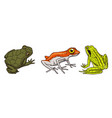 tropical amphibians wild animals frogs and vector image