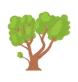 A tree with a spreading green crown icon vector image vector image