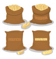 bags filled with herb seasoning root ginger vector image