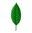 drawing tropical leaf vector image vector image