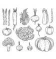 farm vegetables sketches set vector image vector image