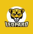 leopard head logo vector image