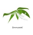 Sourwood Tree Blooms wild flower vector image