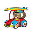 koalas surfing time driving car cartoon vector image vector image
