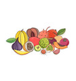ripe juicy tropical fruits lying together isolated vector image vector image