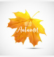 shiny hello autumn natural leaves background vector image vector image