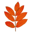 Autumn leaf on white background vector image vector image
