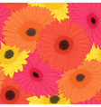 background with gerbera flower vector image