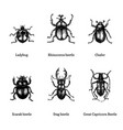 beetles on white background drawn vector image vector image
