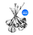hand drawn bunch of garlic vector image vector image