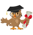 One owl diploma vector image vector image