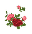 set of pink and red roses bouquets flowers and vector image vector image