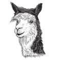 sketch of a Alpacas face vector image