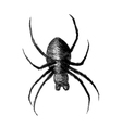 Sketch of a spider vector image vector image