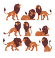 proud powerful lion collection mammal wild cat vector image vector image