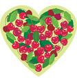 sweet cherries vector image
