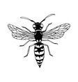 wasp cartoon sketch style insect coloring page vector image vector image