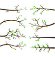 Branch Silhouettes Elements vector image vector image