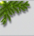 green branches of a christmas tree on a checker vector image