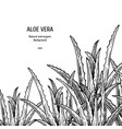 hand drawn background with aloe vera vintage vector image vector image