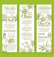 olives sketch banners for organic olive oil vector image vector image
