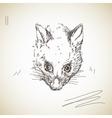 possum muzzle vector image vector image