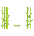 bamboo background exotic garden plants and vector image vector image