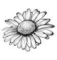 beautiful monochrome black and white daisy flower vector image