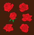 flowers roses buds and green leaves roses set vector image
