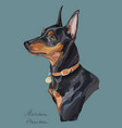 miniature pinscher colorful hand drawing portrait vector image vector image
