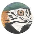 Watercolor parrot eye vector image
