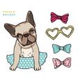 french bulldog cute puppy bulldog with vector image