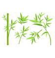 green bamboo stem and leaves colorful vector image vector image