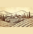 hand drawn vineyard landscape vector image vector image