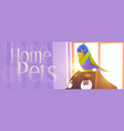 home pets cartoon banner parrot sit on dog head vector image