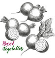 beet vegetable set detailed engraved vintage vector image vector image