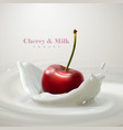 cherry falling in the yogurt vector image vector image