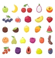 Fruits berries vector image