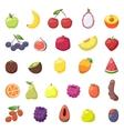 Fruits berries vector image vector image
